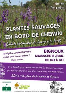 Plantes sauvages en bord de chemin : balade botanique du bourg à la forêt @ Bignoux | Bignoux | Nouvelle-Aquitaine | France