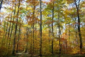 [COMPLET] Découverte de l'écosystème forêt