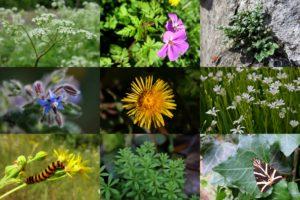 Flore des villes au printemps @ Poitiers | Poitiers | Nouvelle-Aquitaine | France