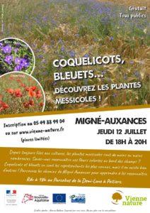 Coquelicots, bleuets... venez découvrir les plantes messicoles !