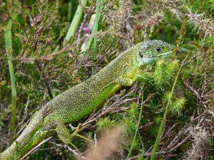 [ANNULÉ] À la découverte des Reptiles