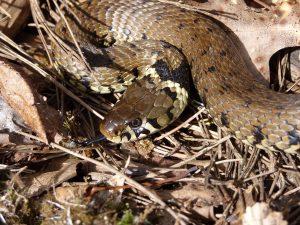 Annulé - À la découverte des reptiles