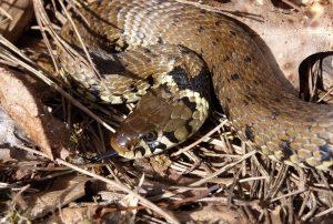 À la découverte des Reptiles @ Montmorillonnais