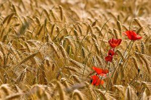"""Table ronde """"Quelles agricultures pour demain préservant la biodiversité ?"""" @ Espace Mendès France, Poitiers"""