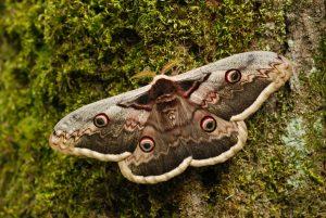 Papillonnade nocturne! @ Vienne Nature