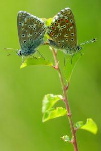 Flore et papillons des falaises de Beauvoir @ Vouneuil-sous-Biard