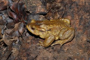 Prospection amphibiens