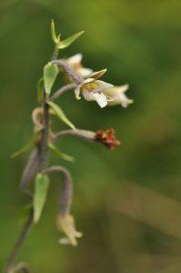 La flore du Marais des Ragouillis @ Marais des Ragouillis, Montreuil-Bonnin