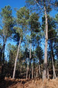 Vie de la forêt et sylviculture: antagonisme ou symbiose? @ Forêt de Moulière, Montamisé