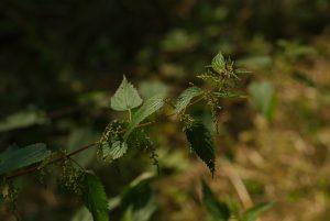 Raconte-moi une plante @ Secteur de Jazeneuil / Curzay-sur-Vonne