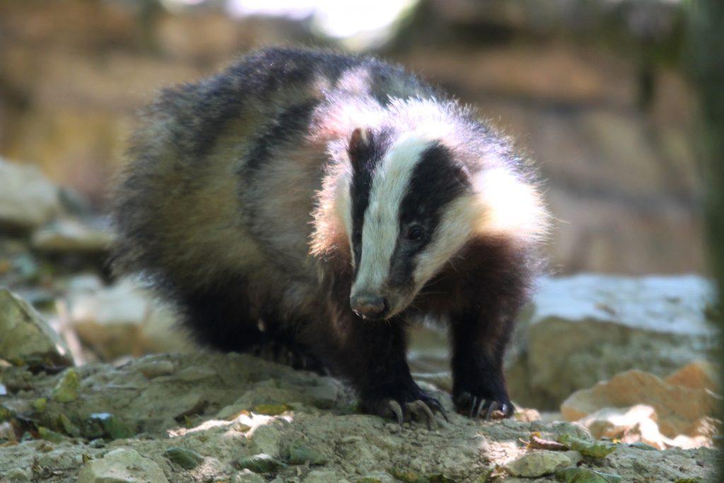 [ENFANTS] Les traces et indices des animaux @ Croutelle, Parc des Vignes de Robineau