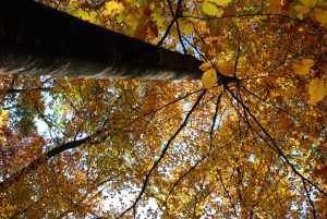 ANNULÉ - La biodiversité du site à l'automne