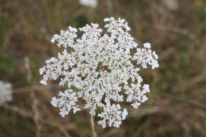 [COMPLET] Formation botanique