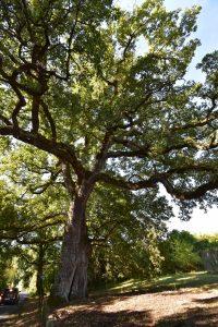 Visio - Inventaire des arbres remarquables de la Vienne : devenez relais local !