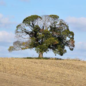 [VISIO] Initiation à la mesure et la reconnaissance des arbres