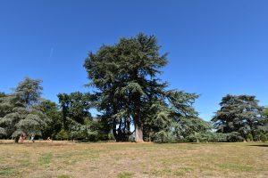 Reconnaître les arbres de forêt facilement @ Ligugé