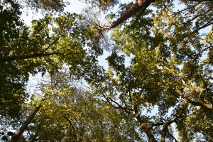 Et si on découvrait la nature ensemble ? (journée de découverte enfants) @ Monts-sur-Guesnes