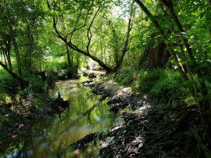 Balade Natura 2000 à la découverte de la vallée du Corchon @ Liglet