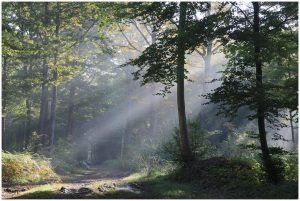 Découvrons la nature à l'aube @ Monts-sur-Guesnes